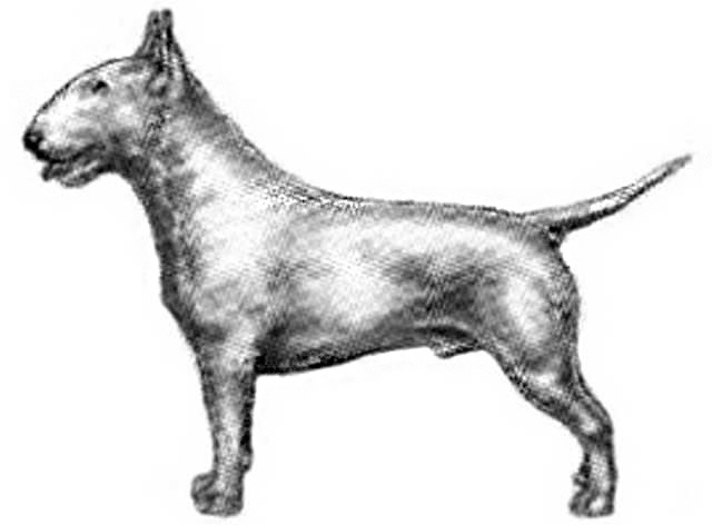 sub-tipo terrier