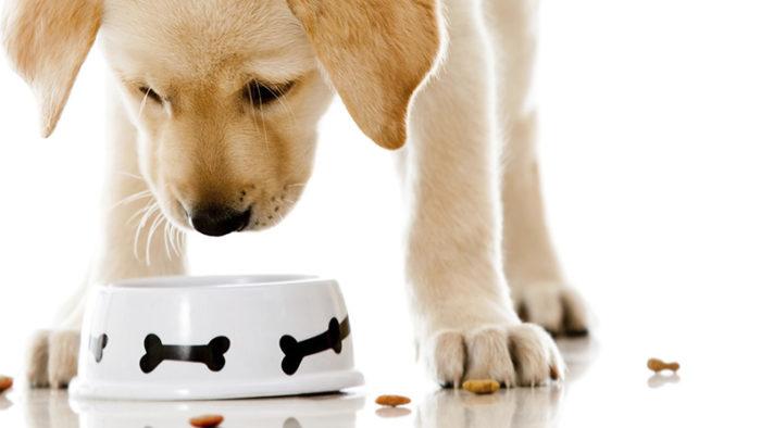 cachorro-comiendo