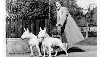 mujer e historia bull terrier