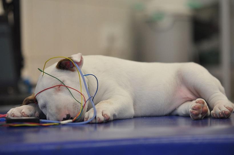 el test de BAER cachorro sordera