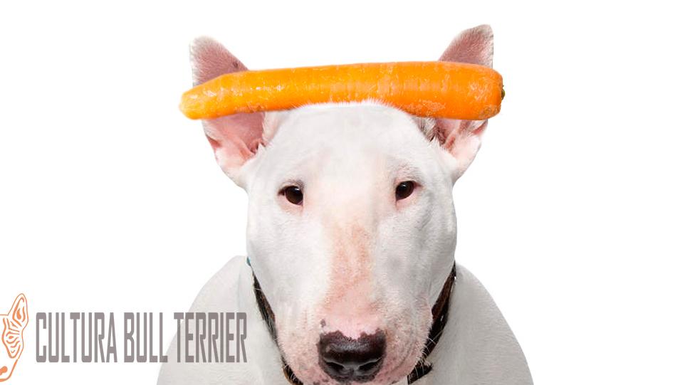 zanahoria bullterrier culturabullterrier