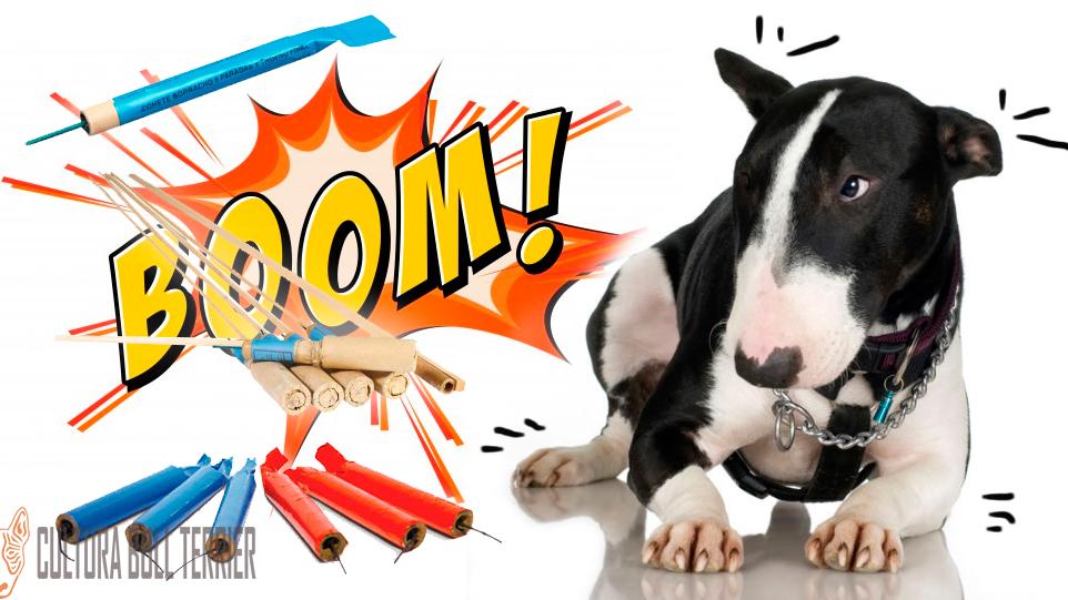 bull-terrier-fobia pirotecnia